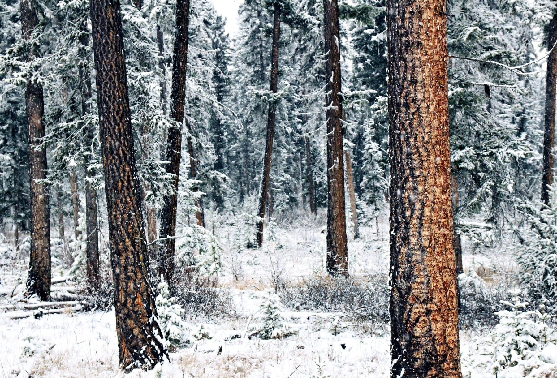 WoodBook | Winter/Spring 2021 | Product Concept | Douglas Fir 2