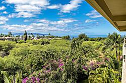 Maui Banyan #Q-403A