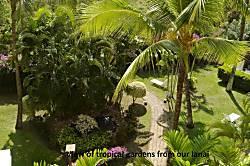 Maui Banyan - Stine - G509