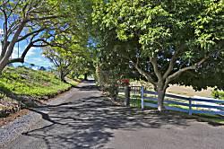 Maui One