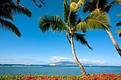 Maui Bound