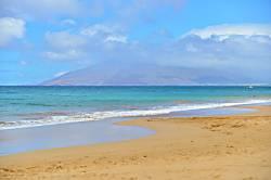 Maui Banyan F102