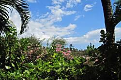 Maui Banyan 2BR