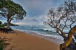 Islander on the Beach 147