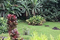 Punana Aloha