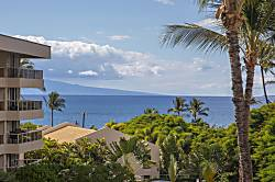 Maui Banyan H306