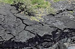 Hale Kai Nalu