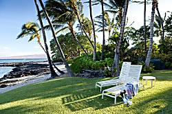 Beach Banyan