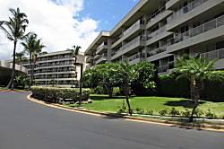 Maui Banyan H-213
