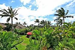 Maui Kamaole M203