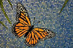 Pacific Monarch 3101