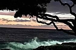 Kona Isle E31