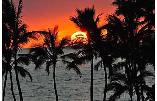 The Palms at Wailea 207