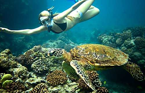 Hale Honu ~ On Turtle Cove