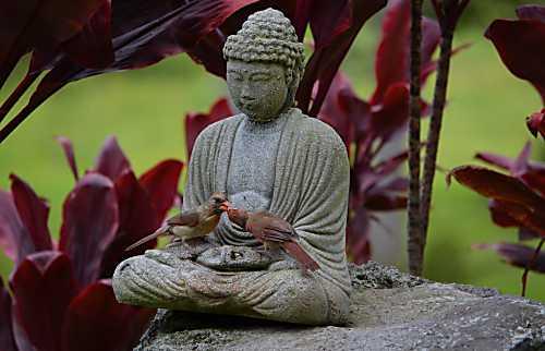 Waiola Guesthouse & Zen Garden