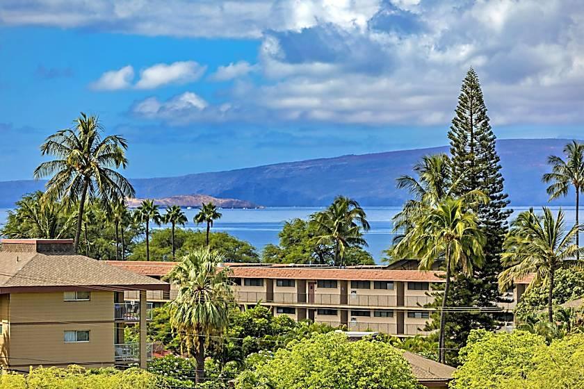 Maui Banyan #Q-403