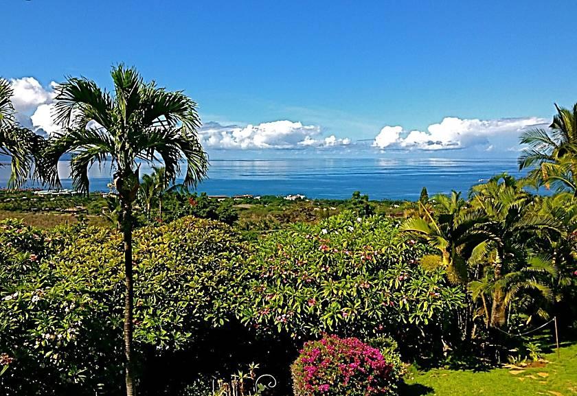 Maui Ocean Palms