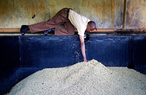 Timothy checks the fermentation progress at Kabingara.
