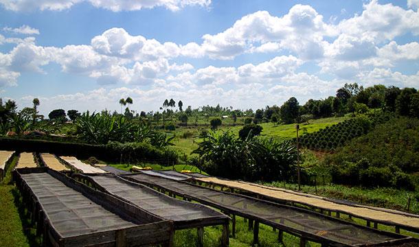 Kirinyaga provides high elevations and stunning views.