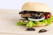 Burger Wald & Wiesen