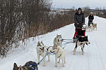Sled dog delivery: A musher is...