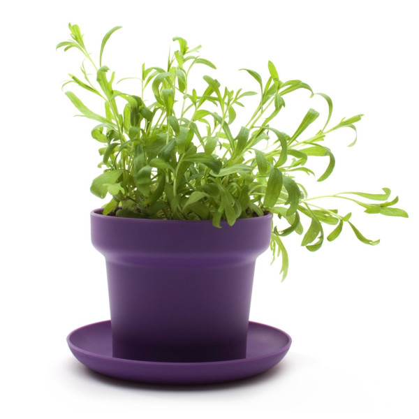 Authentics Flower Pot, Set of 2, Violet