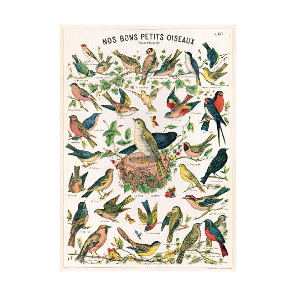 Cavallini Decorative Paper- Bird Chart 20x28 Inch Sheet
