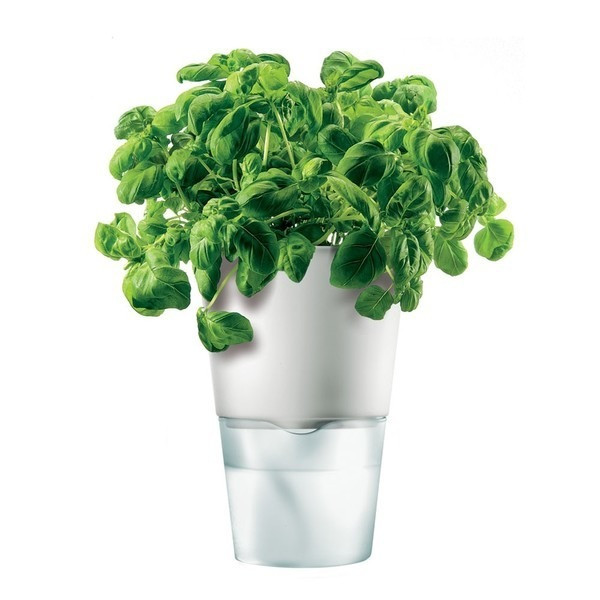 Eva Solo Herb Pot, Self-Watering, Chalk White