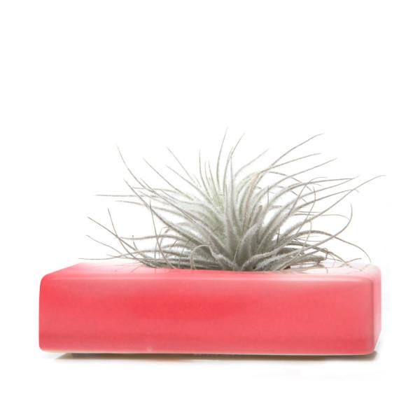 Chive Swayzak Planter (Pink)
