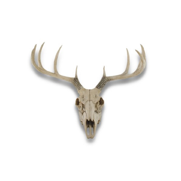 10 Point Buck Deer Skull Bust Wall Hanging