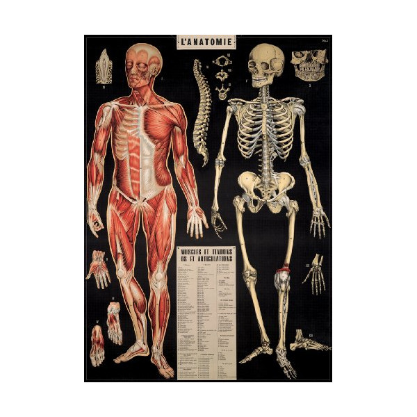 Cavallini & Co. Anatomy Decorative Wrapping Paper 20x28