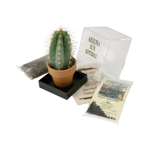 Grow your own Saguaro Cactus Kit - Incubator - Cactus Seeds - Southwest Arizona Southwestern Gift Idea - Seed Propagation - Desert Souvenir
