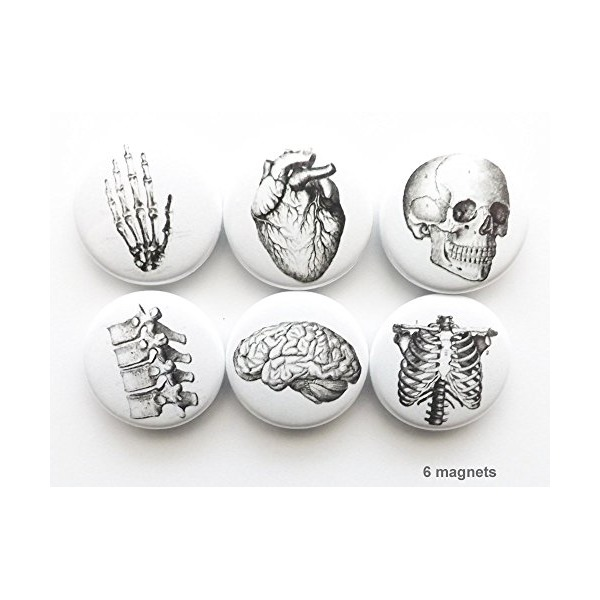 "1"" Anatomy magnets set of 6 skull brain hand anatomical heart party favors stocking stuffers graduation gift"