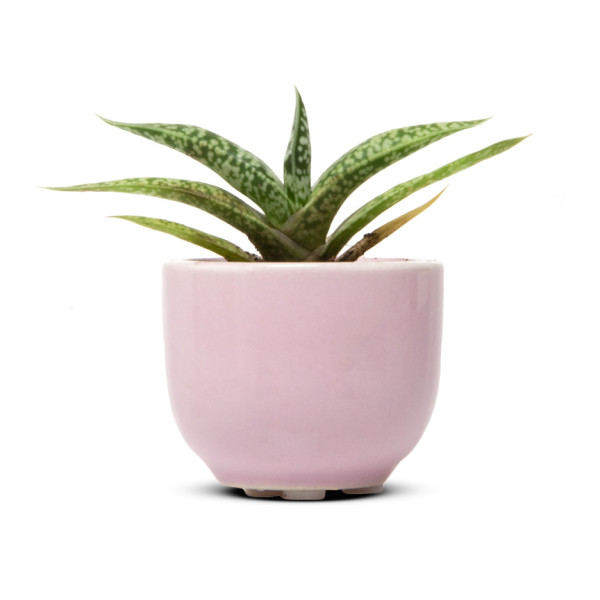 Chive Succulent Cup, Air Plant and Succulent Holder