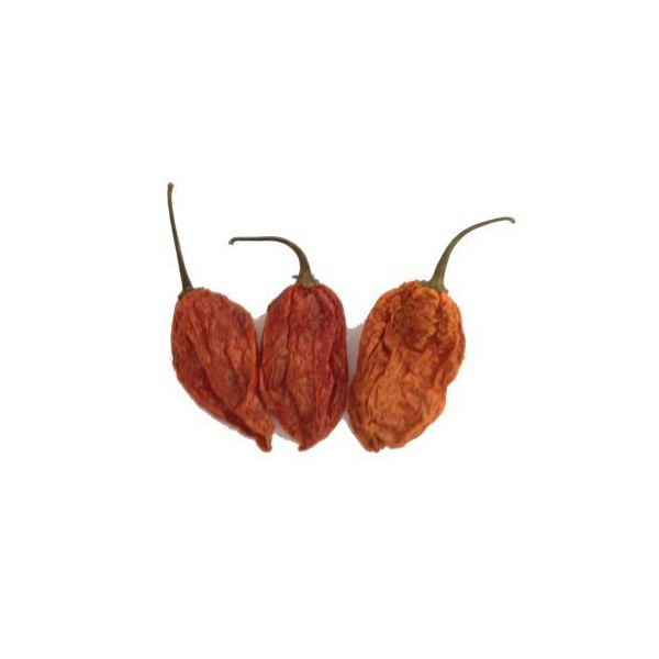Bhut Jolokia Ghost Pepper Chilli [10g Dried]