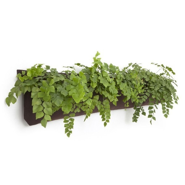 Woolly pocket living wall planter 95 on amazon for Living wall planter