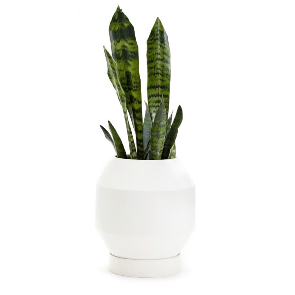 Areaware Porps Radial Planter Vessel