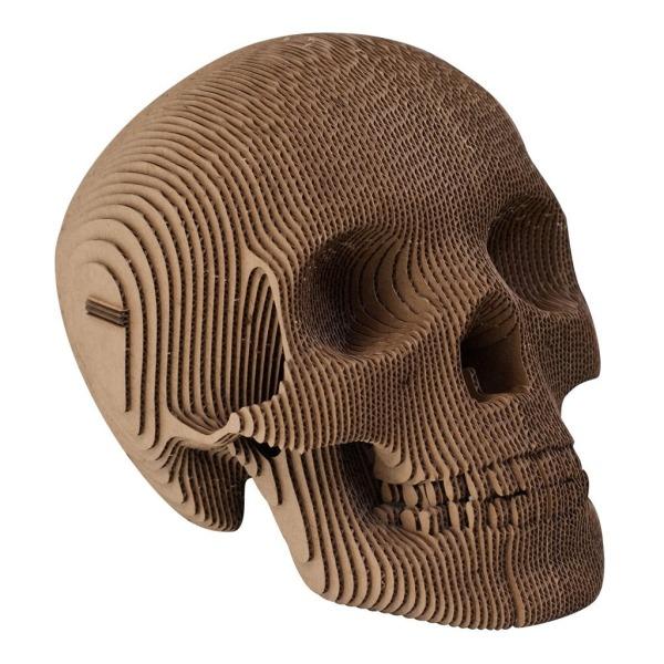 Vince Cardboard Human Skull (Brown, Large)