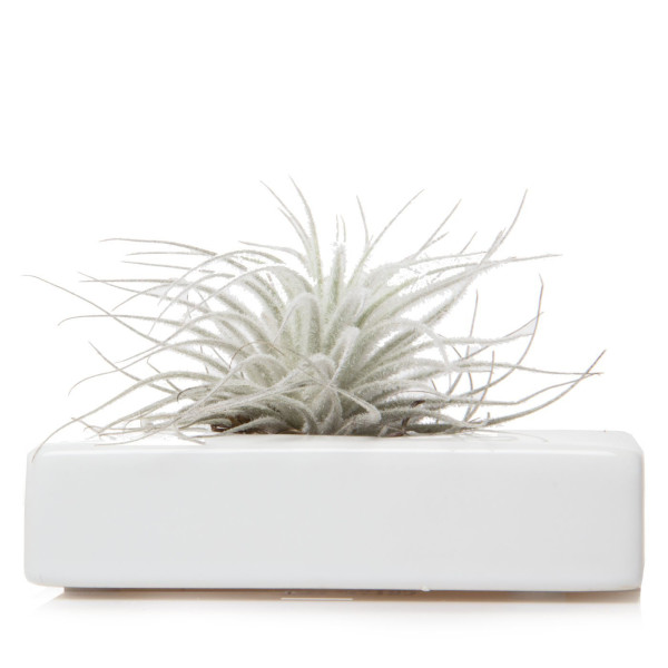 Chive Swayzak, Ceramic Flower Vase and Air Plant Holder