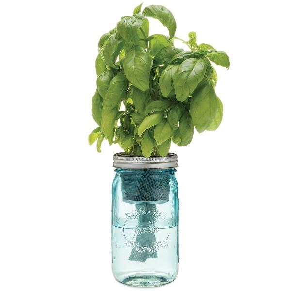 Modern Sprout Garden Jar, Basil