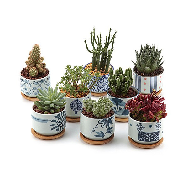 T4U 3 Inch Ceramic Japanese Style Serial succulent Plant Pot/Cactus Plant Pot Flower Pot/Container/Planter Full colors Package 1 Pack of 8