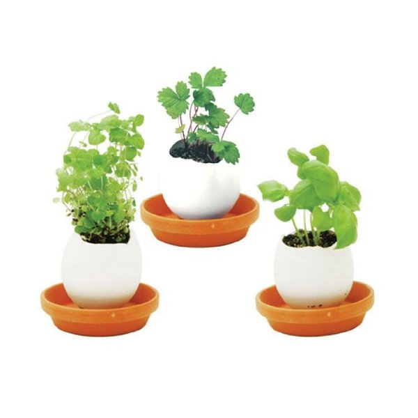 Eggling, Crack & Grow - Lavender, Mint, or Basil