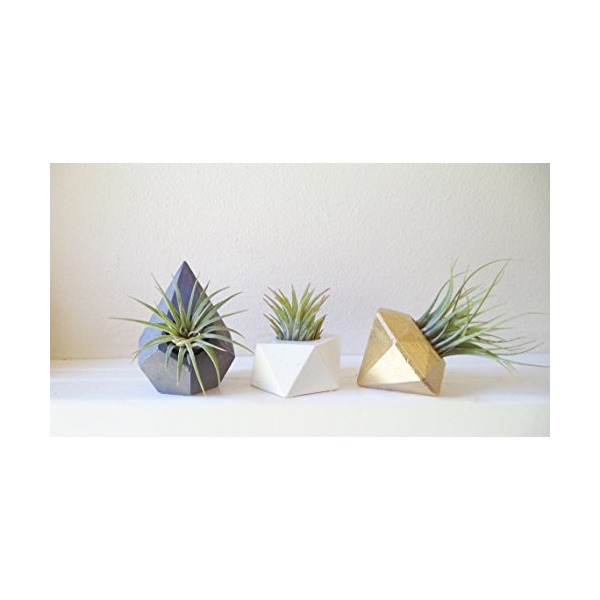 Geometric planter trio, MINI air plant holders, faceted mini plant containers, desk planter, gift set