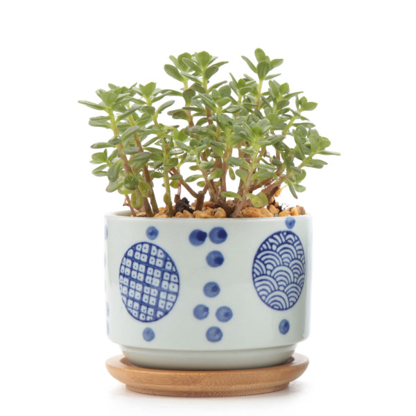 T4U 3 Inch Ceramic Japanese Style Serial No.2 Succulent Plant Pot, White