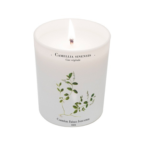 Camellia Sinensis Tea Plant Candle 6.7oz