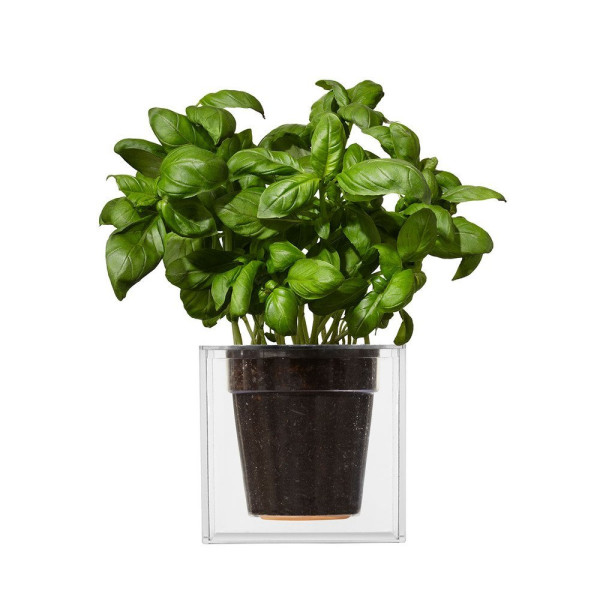 Boskke Cube Large Planter, Clear