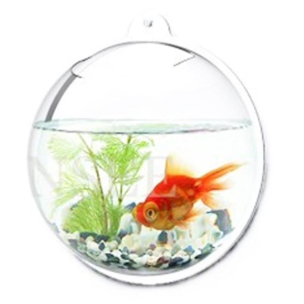 Wall Mount Hanging Beta Fish Bubble Aquarium