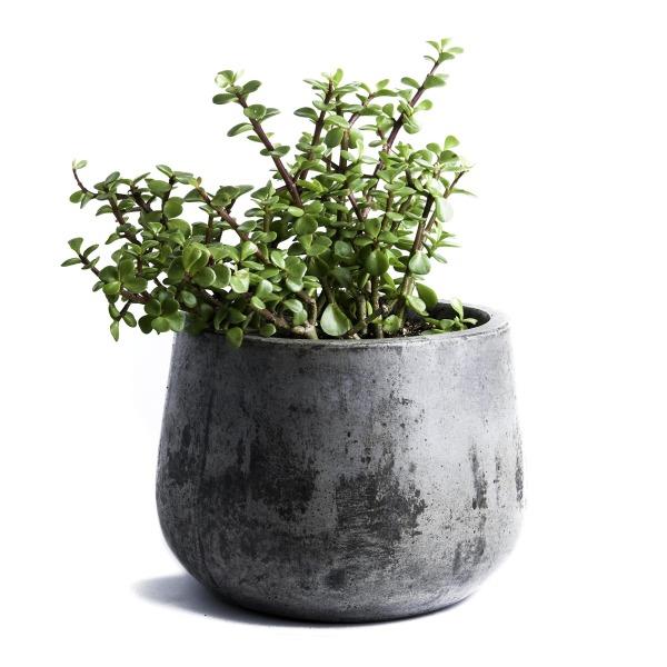 Repose Samai Succulent Planter, Large