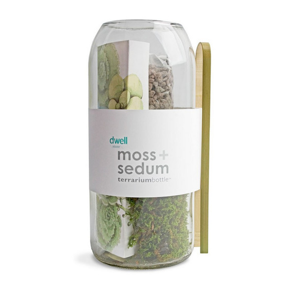 Moss + Sedum Vertical Terrarium Bottle
