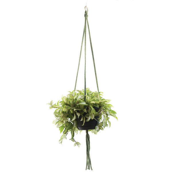 Wildwood 3 Leg Macrame Plant Holders, Lambs Wool, 42-Inch
